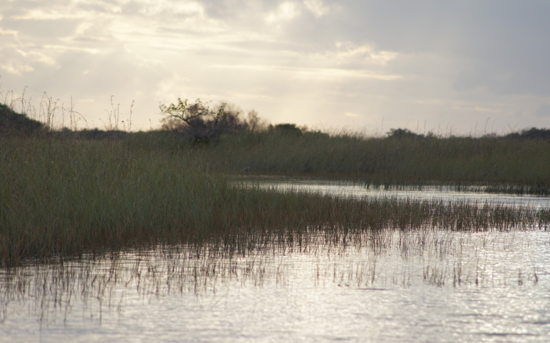 Paying Homage to Wetlands
